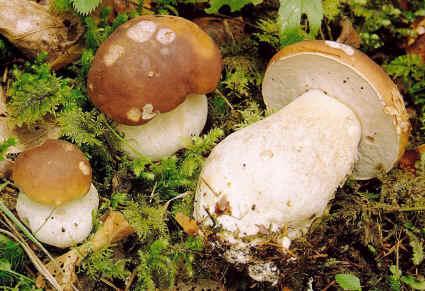 Dieta dei funghi: dimagrire con gusto