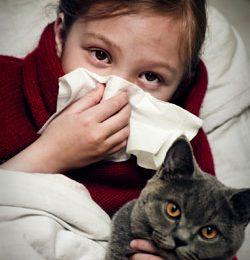 Allergia ai gatti: per guarire basterà un unico vaccino