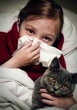 Allergia ai gatti