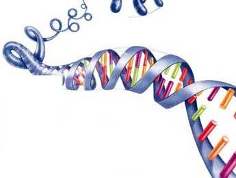 Alzheimer: individuati 5 nuovi geni predisponenti