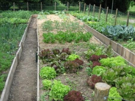 Come coltivare l'orto in casa