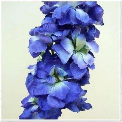 violaciocca blu