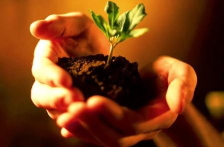 Quando piantare i semi: consigli utili