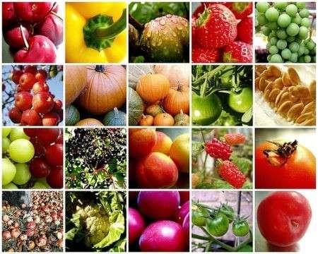 Cibo vegetale