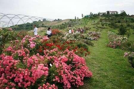 Gita fuori porta in mezzo alla natura: il Museo Giardino delle Rose Antiche