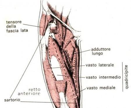 Stiramento della coscia: sintomi e rimedi