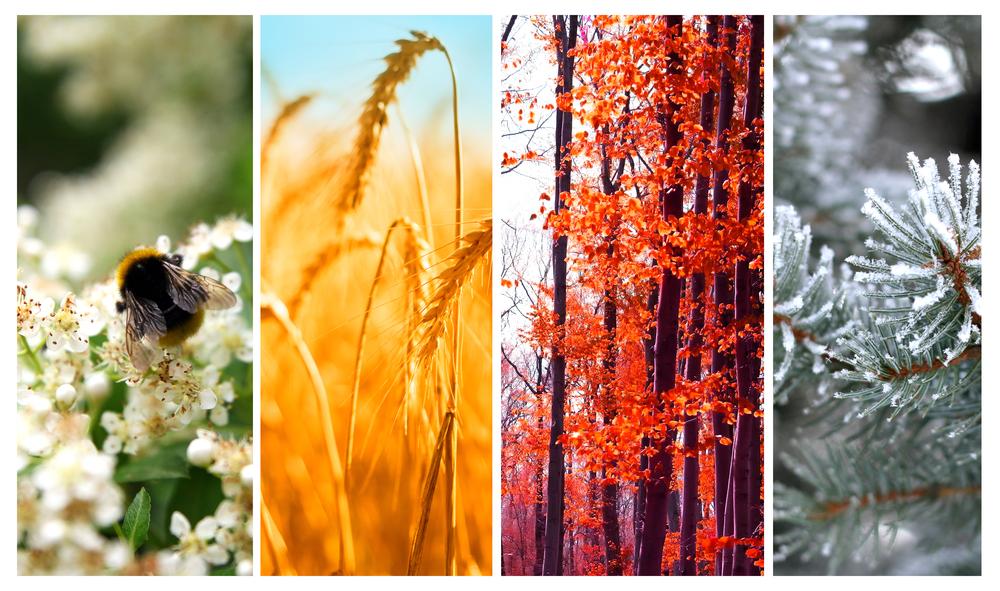 filastrocche sulle stagioni