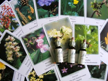 Tutti gli effetti benefici dei fiori di Bach