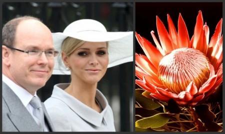 La torta per il matrimonio di Alberto e Charlene sarà ispirata ad un fiore sudafricano
