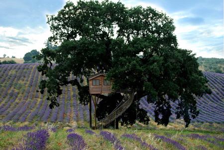 Una vacanza originale in una casa sull'albero