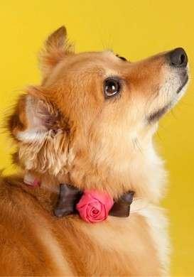 Collari adorabili per i vostri cagnolini, idee e consigli