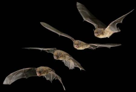 Saliva pipistrello farmaco ictus