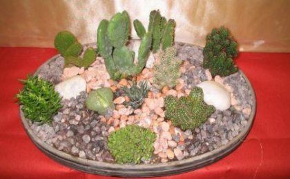 Consigli per creare dei giardini in miniatura con le piante d'appartamento