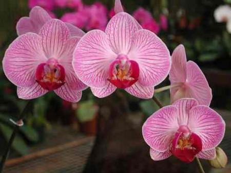curare le orchidee