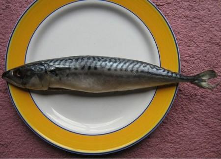Il Pesce Nellalimentazione è Sempre Un Toccasana Facciamo Qualche