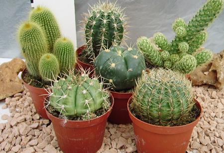 Cosa sono e come si curano le piante succulente
