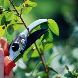 Come si fa la potatura delle piante d'appartamento