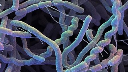 Cos'è la tubercolosi?