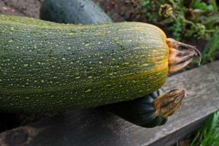 Cucinare le zucchine al vapore una ricetta light pourfemme for Cucinare le zucchine