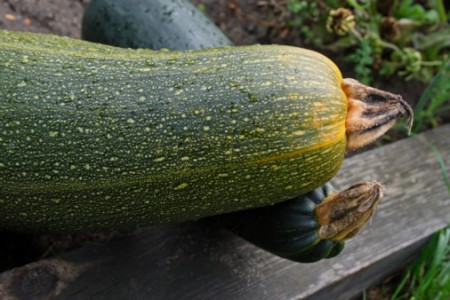 zucchine al vapore