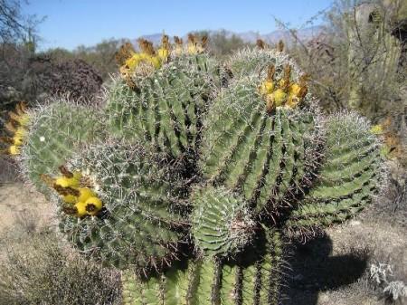 Quando e come bisogna bagnare i cactus? Per voi e le vostre piante, dei preziosi consigli