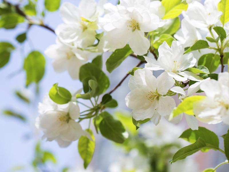 Coltivare la begonia, come prendersi cura di questo fiore profumato e colorato