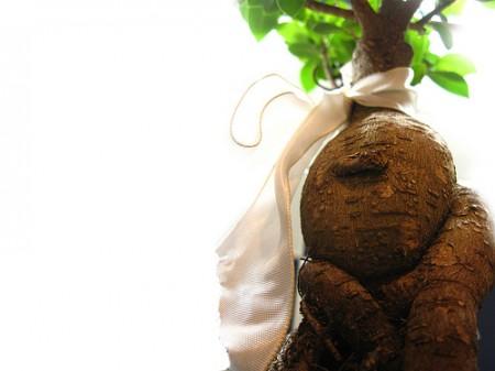 Bonsai Ficus Ginseng fai da te, come realizzare e coltivare questa pianta