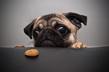 Animali domestici: i migliori consigli per risparmiare sulle spese