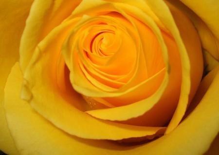 Ricette con i fiori, un secondo piatto di coniglio farcito con rose e calendula