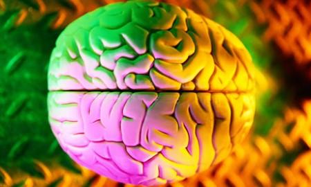 Cervello 5 sensi