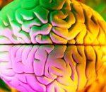 I 5 sensi sono collegati a livello cerebrale, potenziandone uno si rafforzano gli altri
