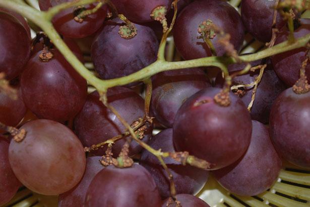 Frutta salute uva