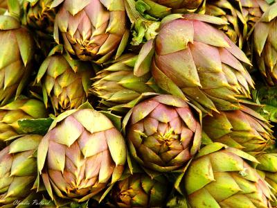 piante dimagranti carciofi
