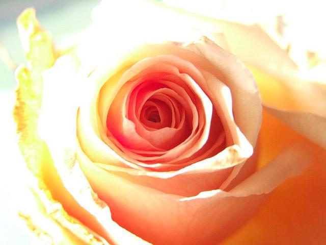 Ricette con i fiori, insalata estiva di tonno, acciughe e petali di rosa