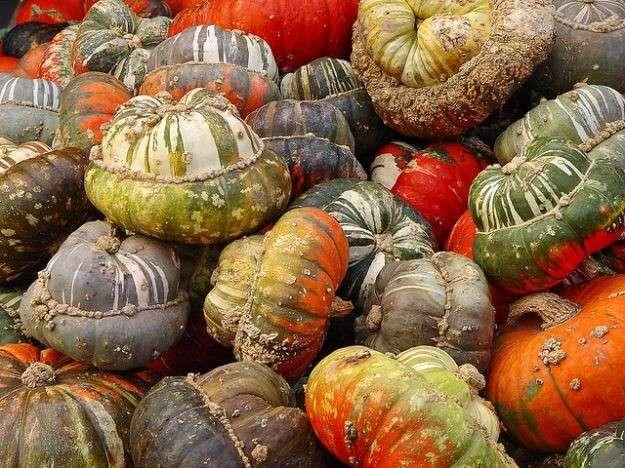 Halloween: zucche da colorare per i bambini [FOTO]