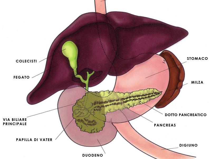 Calcoli alla cistifellea (o colecisti): sintomi e rimozione