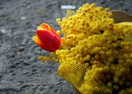 Festa della donna: tutte le poesie da regalare l'8 marzo