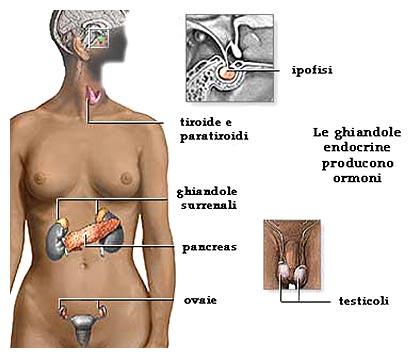Ghiandole surrenali: disfunzioni e patologie
