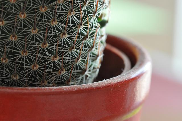 pianta di fiori