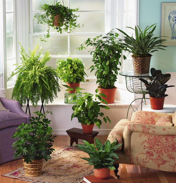 Come curare le piante durante le vacanze