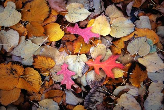Decoupage con le foglie: passatempo per l'autunno [FOTO]