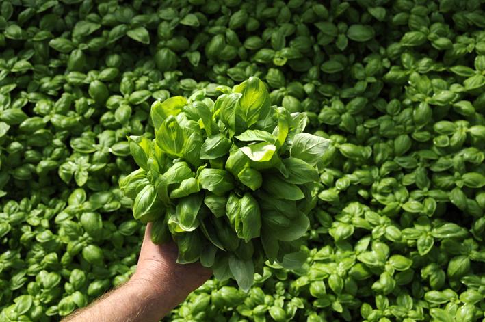 Come coltivare erbe aromatiche in casa