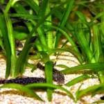 Alga spirulina per dimagrire: proprietà, controindicazione ed effetti collaterali