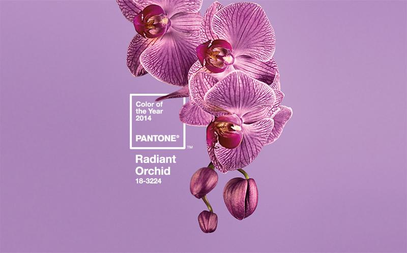 pantone_2014_orchidea_a