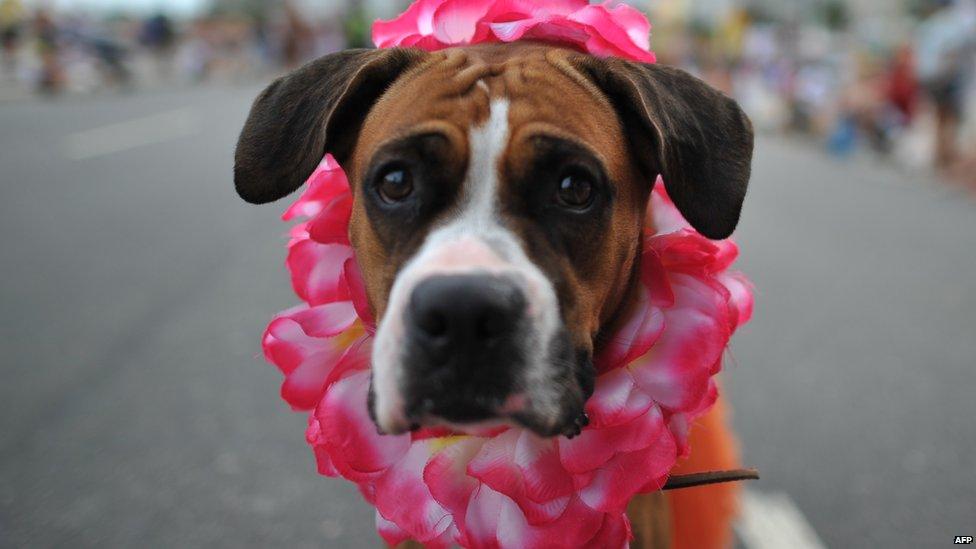 Cane con collana di fiori