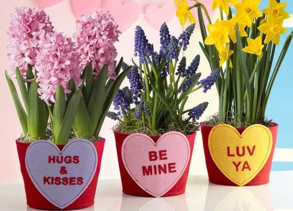 Vasetti di San Valentino