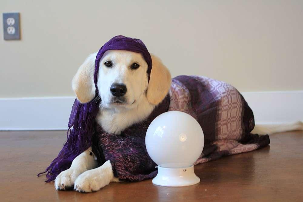 Costumi di Carnevale per cani: i più divertenti [FOTO]
