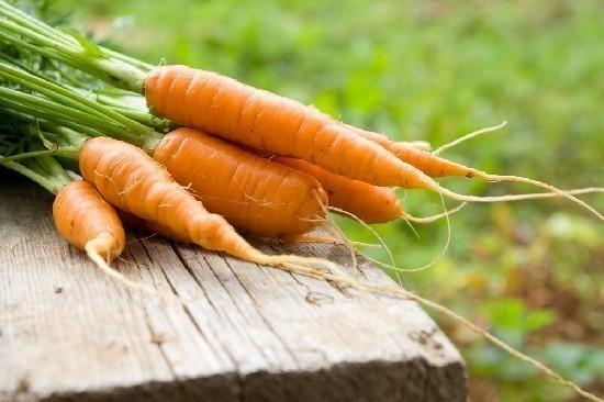 Carote: tutte le proprietà benefiche e nutrizionali