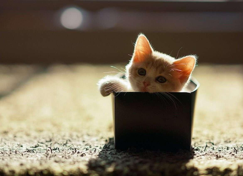Piccola scatola piccolo gatto