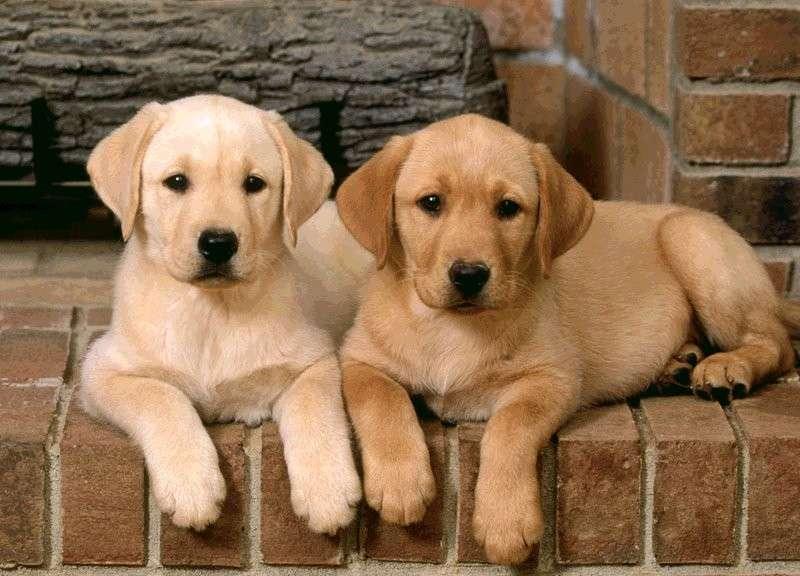 Cura di un cucciolo di cane: accoglienza, igiene ed educazione [FOTO]